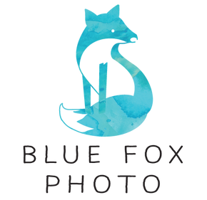 Blue Fox Photo